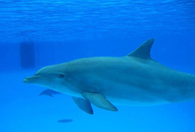 Ischia Delfine