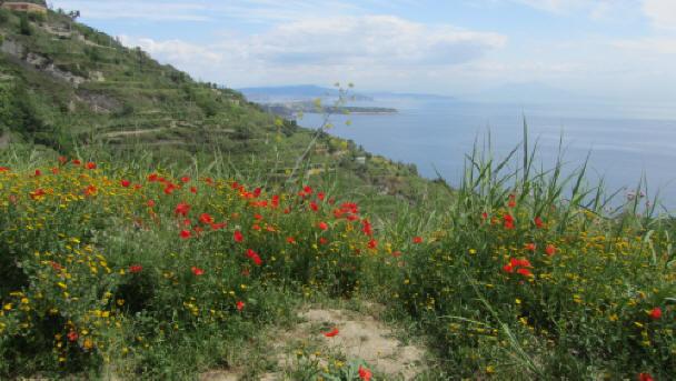 Ischia Blog, Wanderweg auf Ischia
